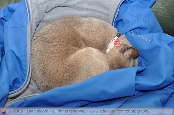 those that think I do not own a jacket - I actually used it today! - well, my kitty did! :-)