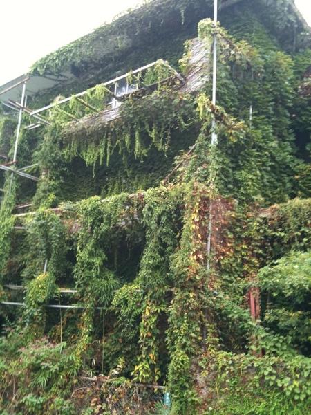 人が住まないと、建物もこんな風になってしまうのね…