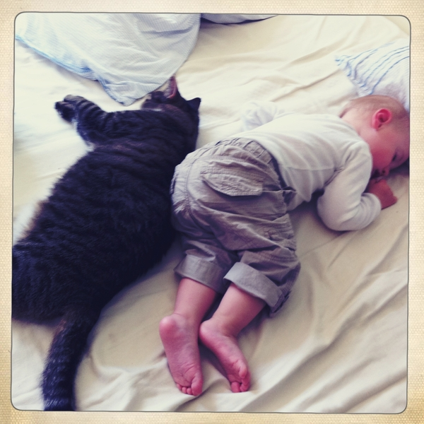 Fletcher of the day: catnap