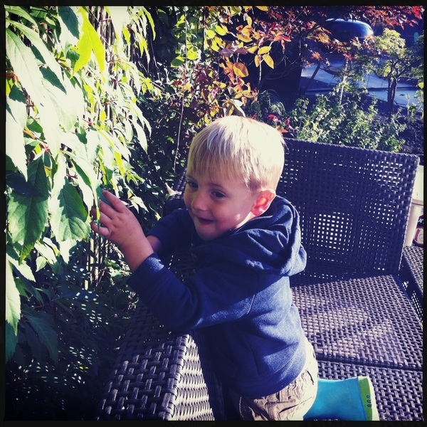 Fletcher of the day: Picking leaves