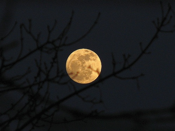 Rising golden moon and branches 7/3/12 @virtualastro #moonwatch #wonders #bbcstargazing