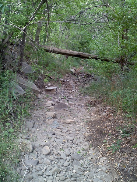 "The ""creek"" next to my studio. We. Need. Rain. #drought #Taos #NM"