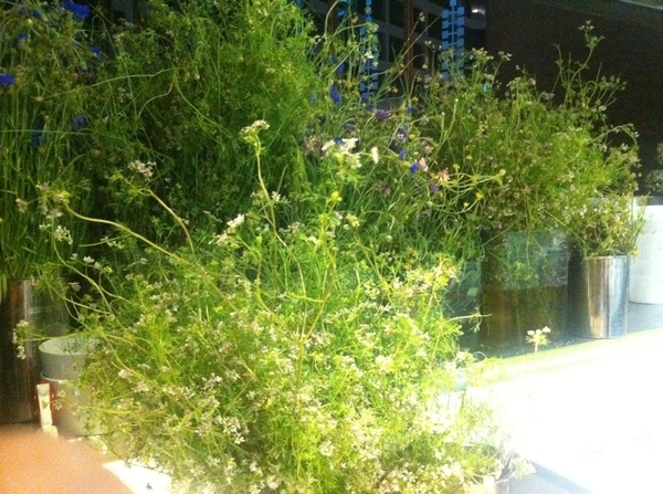 Visiting Chef Jordan's Kitchen at Red O in LA, i was greeted w/ buckets of blossoming herbs that he picks 2 order