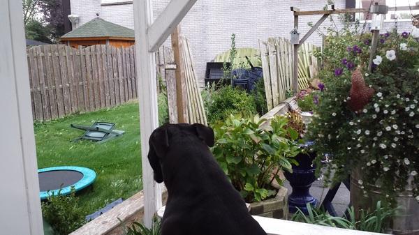 De hond keek hoe de hekken vlogen  #buienradar