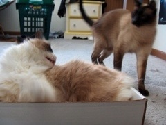 @boxwatcher Next to mine, maybe. I'm sure they are way cool, though! (*cat in a short box lid)