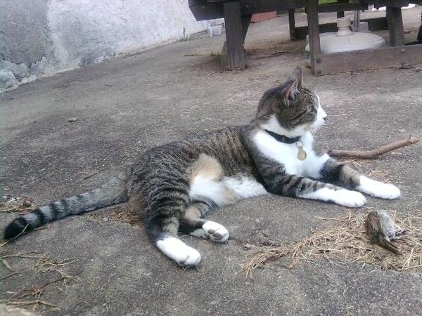 Sisfurcat caught one!