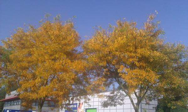 Heerlijk herfstweer #zon