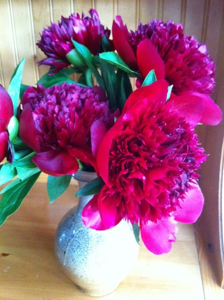 I looked@these full-blown peonies lstnght eating bacon cheeseburgers w my family n backyard;choc-ganache cupcakes
