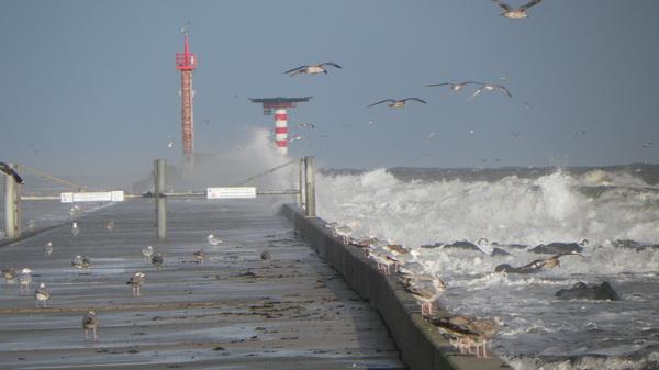 De zee is nog onstuimig vanmorgen na de storm. In Hoek van Holland #buienradar
