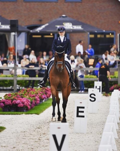 Full focus 💥 #horse #horses #team #nkdressuur #dutch #nationals #dressage #dressagehorse #dressagerider #competition #levise #kepitalia #equestrian #equestrianlife #equestrianstyle #grandprix #u25