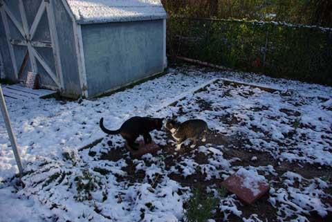 Dis @sisfurcats Bug Bunny in da garden. Der no catnip now! su..