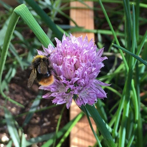 Levendig en paars in de tuin!