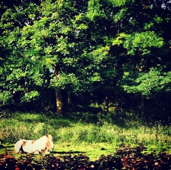 I'd thought of an inspirational tweet but then forgot what is was so here's a photograph of a horse lying down.