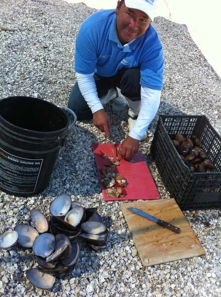Mon, Magdalena Bay BCS: Nolberto cleaning choc clams 2 eat raw (lime,salsa) & stuff w bacon, veg & cook in coals