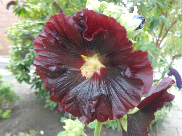 mooi   stok   roos      in         #buienradar