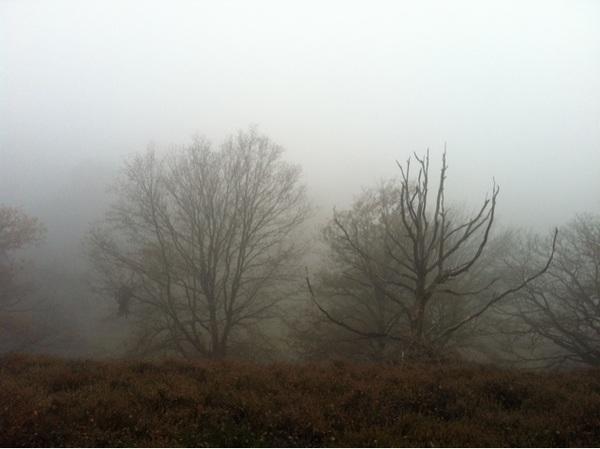 Prachtig uitzicht op de #Posbank! Jammer  van de mist ...