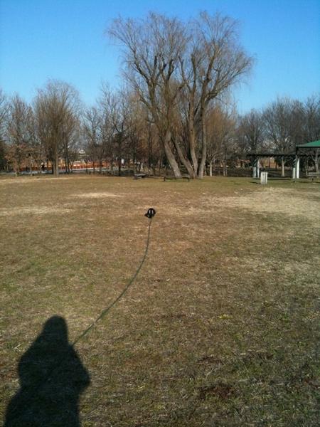 水元公園の穴場スポット。外環を挟んだ反対側にも公園があるのは、意外と知られていない。ロングリードで走りまくりの散歩中!
