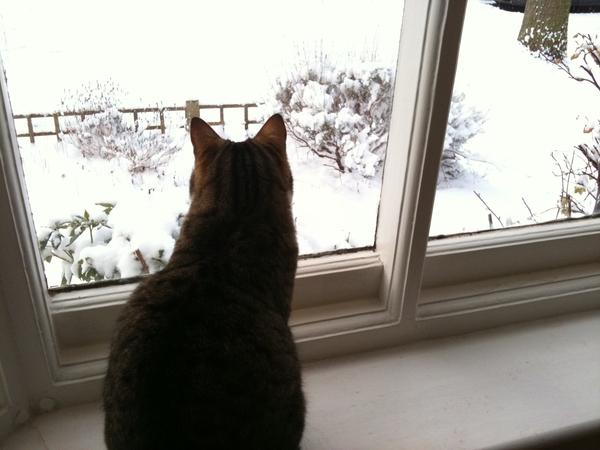 Snow confinement