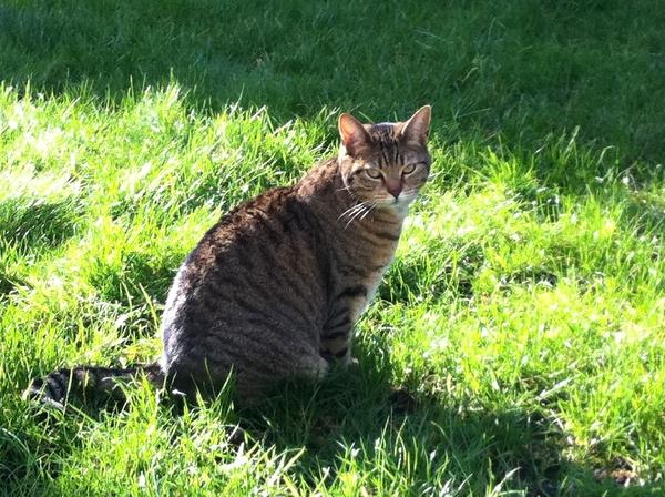 Miss Pebbels in the garden