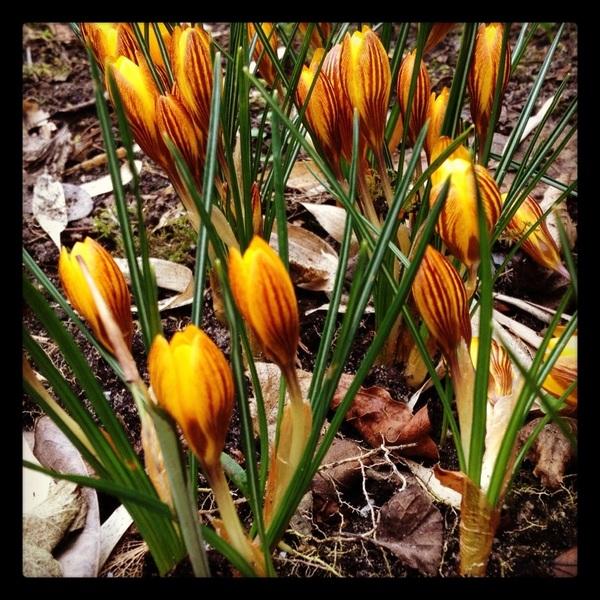 @marswijven ja hier ook al! #lentealarm