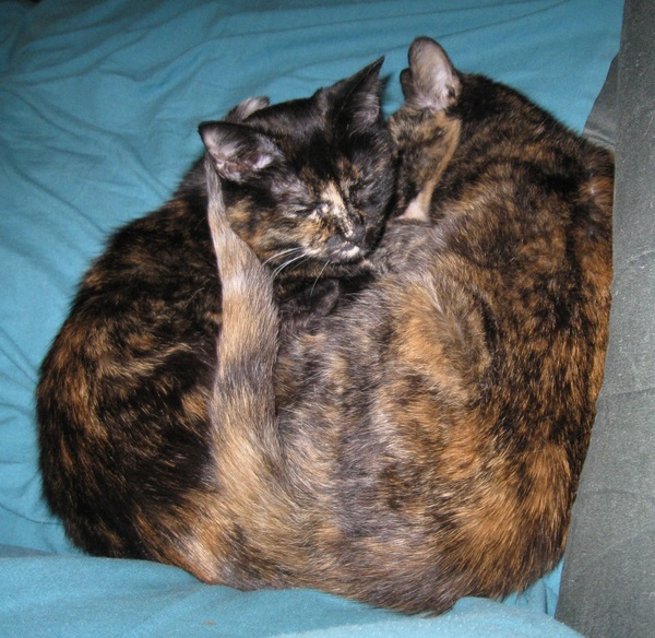Snuggle-torties [cc: @chaosagent23 @SkepCdnChick]