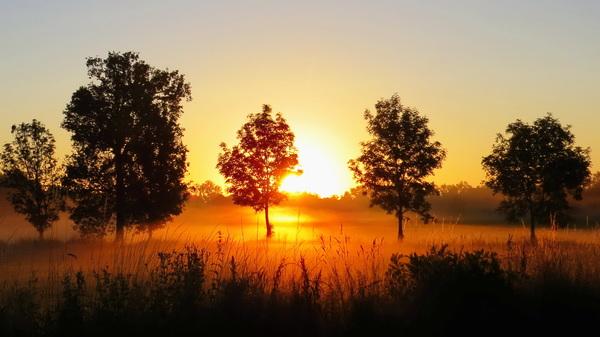 Zonsopkomst met mist #buienradar