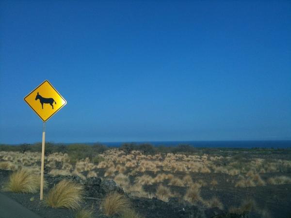 Donkey Crossing! #Kona #Hawaii