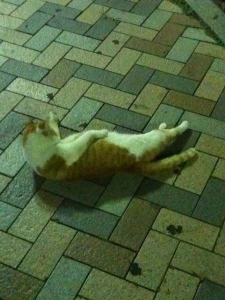 이 섹쉬한 자태를 보라... 한손은 배에 손을 올리고 날 유혹하는 집앞 고양이...( *`ω´) 너무 야해, 너!!!