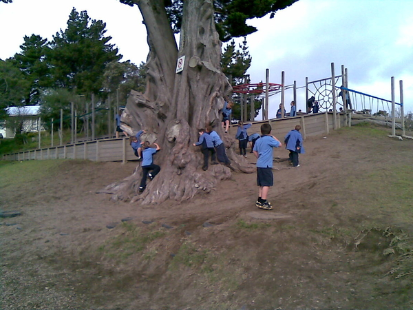 Our playground would be less without our tree