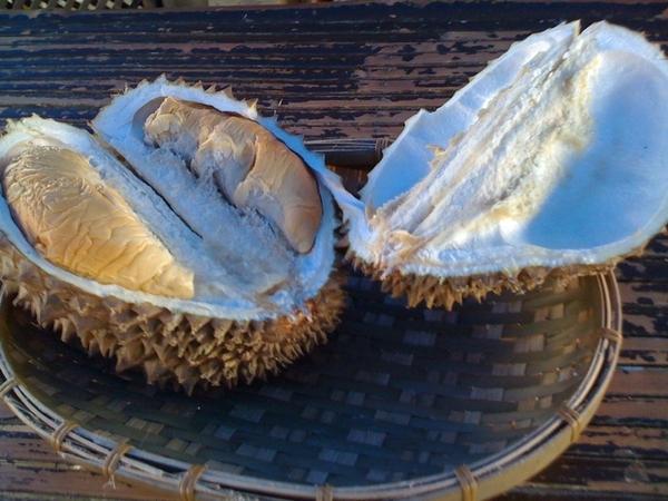 @SpreadEgo have u eaten durian?