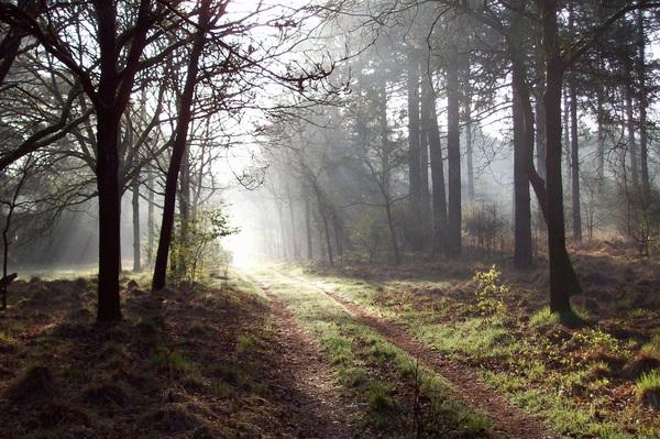 Koude ochtend maar prachtig! #buienradar