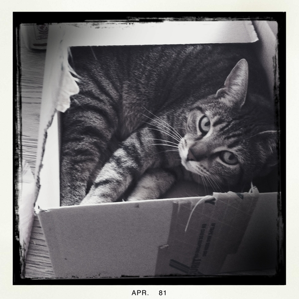 Miss Pebbels in a box