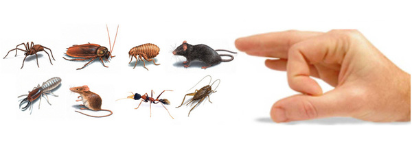 O'Connor Pest Control in Visalia