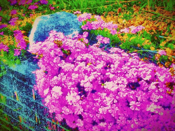 My mom's flowers ~ Photo ART