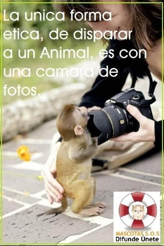 La única forma ética de disparar un animal es con una cámara de fotos.