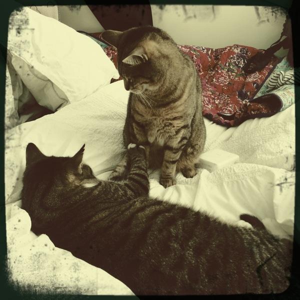 My kitty kats are keeping me company