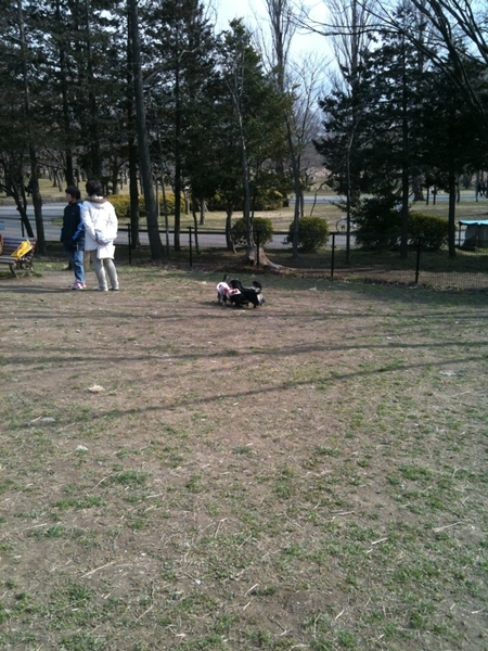 水元公園のドッグラン。天気が良いので、犬も多い。同じ犬種同士で集まる傾向って不思議だね。
