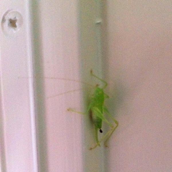 Op safari in mijn eigen huis #bug #fb