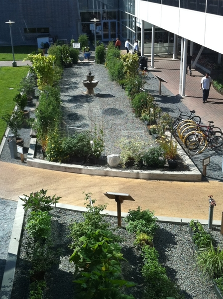 Tour of amazing place that is The Google Campus!Getting ready 4 my presentation 2 Googlers. Cool Earthbox gardens!