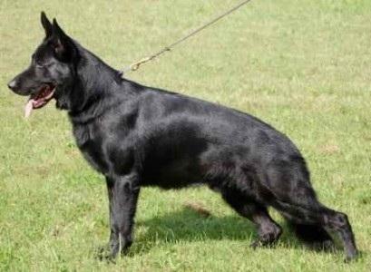 Sacramento Dog Training