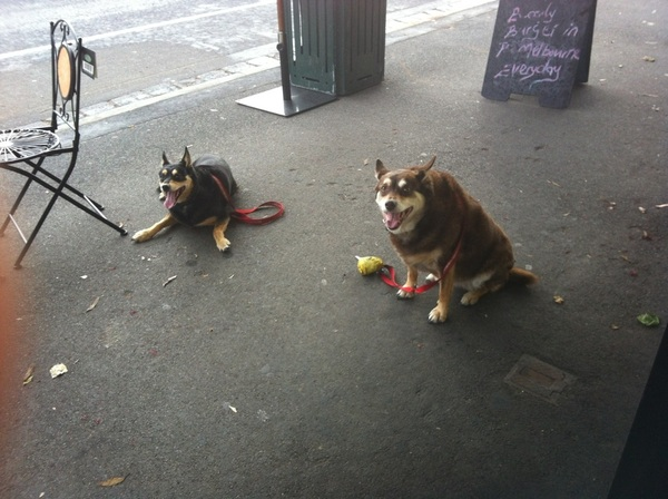 @tallyanddaisy look at these good dogs waiting patiently while we get your coffe
