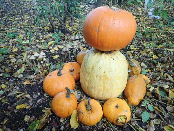 Pompoenen en paddenstoelen... de herfst is echt begonnen.  #buienradar