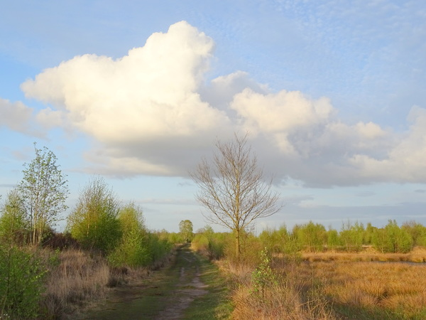 Witte donderdag sloot af met een prachtige witte wolk! #buienradar