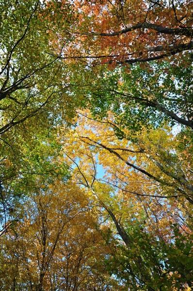 #herfstkleuren#herfst #buienradar
