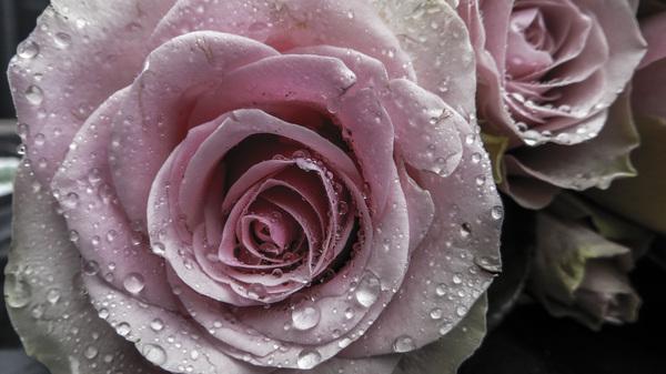 ik geef je een roosje  #buienradar