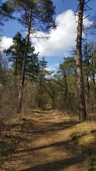 Utrechtse heuvelrug #buienradar