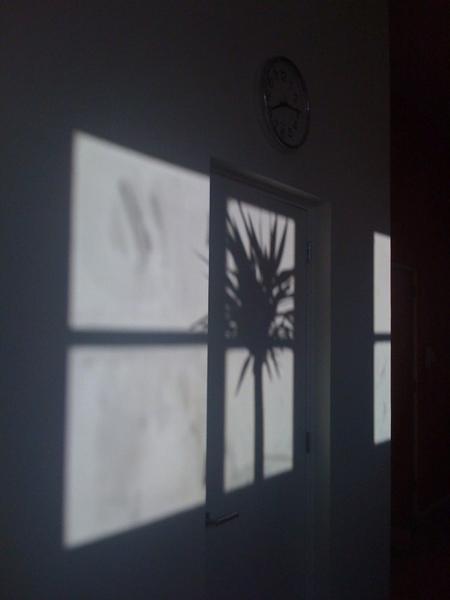 Morning tropical sun