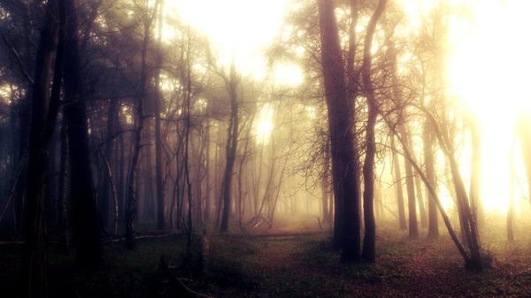 Het Mensinge bos lag er weer mooi bij vanmiddag.