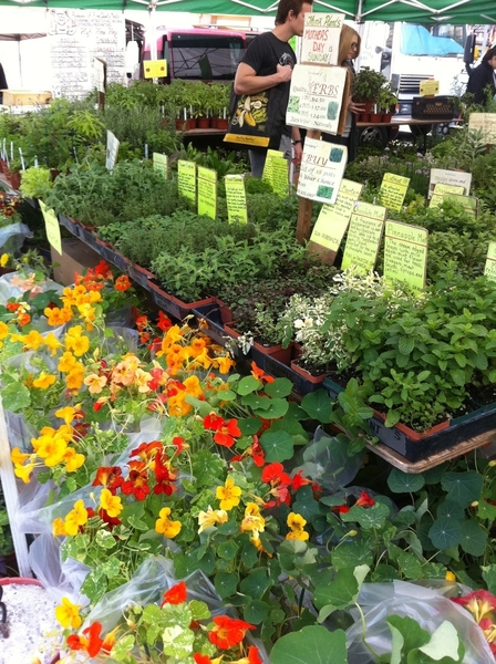 Union Sq Farmers Mkt: HUGE # of artsnl bread&cheese makers. Even in manhattan, everyone wants fresh herbs, flowers