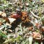 Hoe hard mieren moeten werken met het verslepen van een oorwurm #buienradar